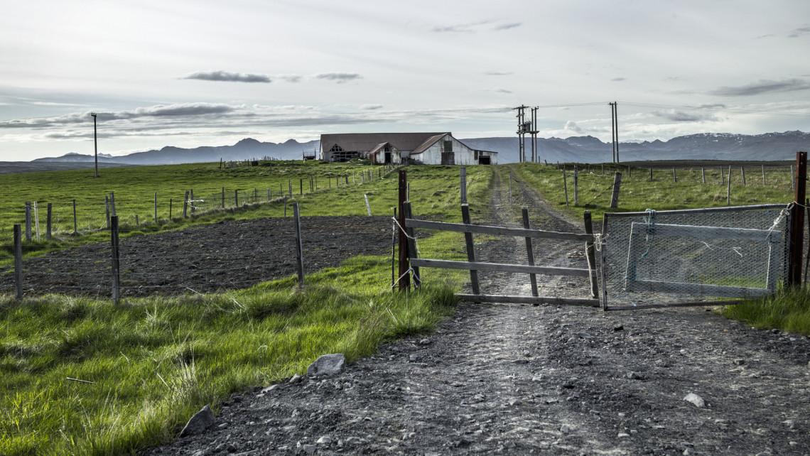 Horrortanya Fejérben: éhen haltak az állatok, miután a gazda eladósodott