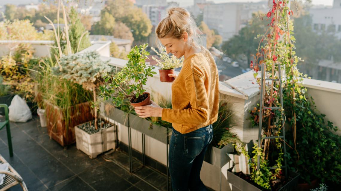 Bálint gazda elárulta: erre lesz szükséged a balkonkertedhez a koronavírus idején