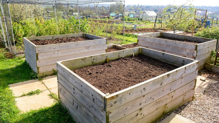 A profi kertészek nagy trükkje: ezzel a legsilányabb földön is jó lesz a szüret