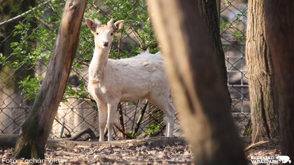 Új lakó költözött a Budakeszi Vadasparkba: látogatók nevezték el a különleges állatot