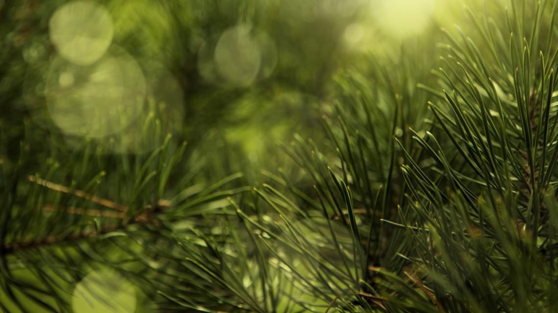 Döntött az önkormányzat: kivágják a balatonföldvári kikötő fáit