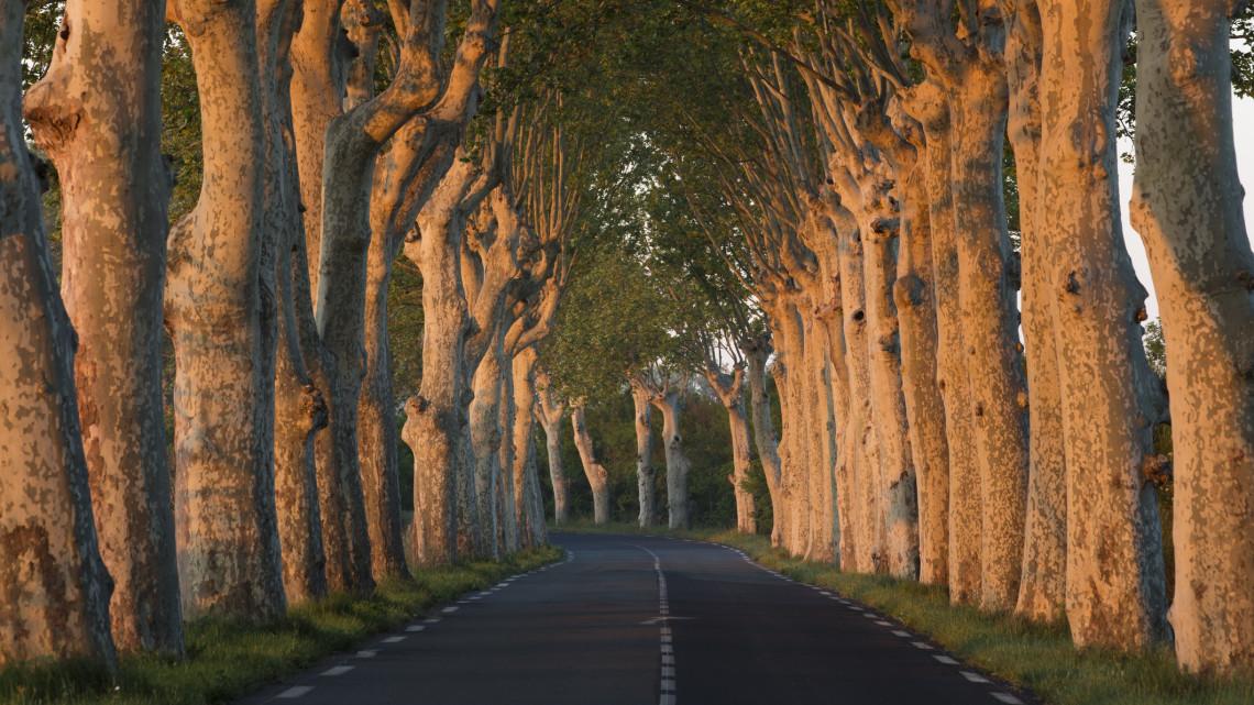 Elképesztő látvány: virágoznak a különleges pécsi fák