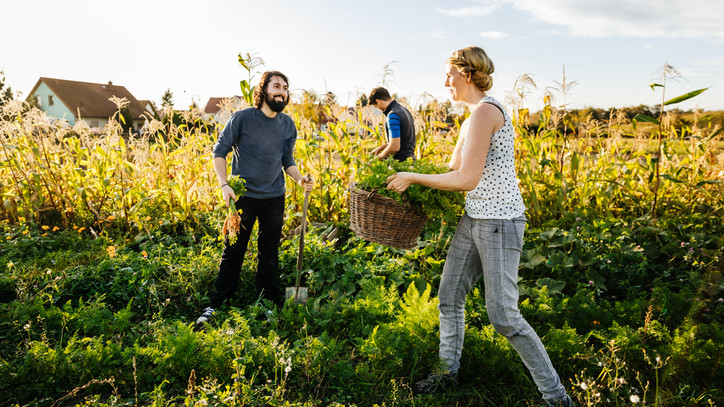 Újabb bejelentés: egyszerűsödnek a mezőgazdasági munkavállalás szabályai