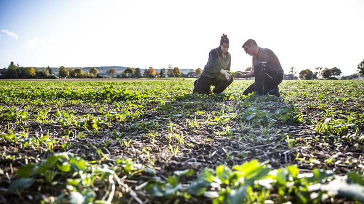 Súlyos gazdasági nehézségeket okozott a járvány: így segíthetsz a magyar termelőknek