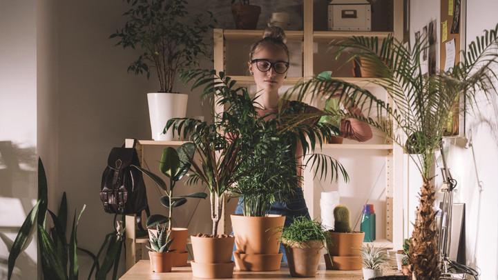 Ezt rontja el a legtöbb hobbikertész: íme 6 tipp a szobanövények életben tartásához