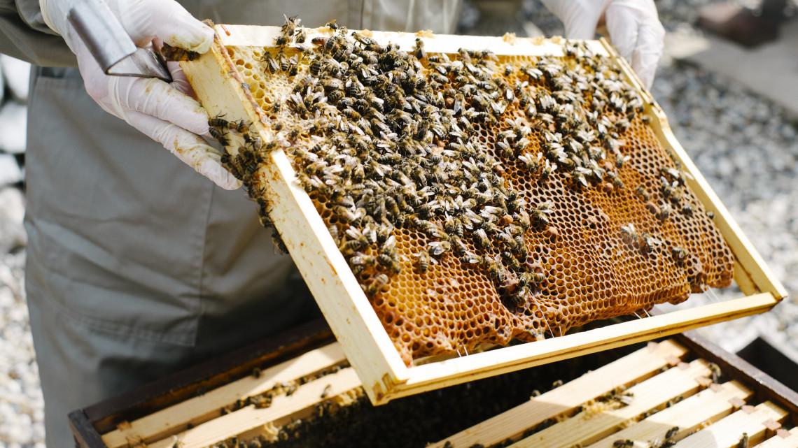 Veszélyben a méhészek: nagyot eshet az ágazat