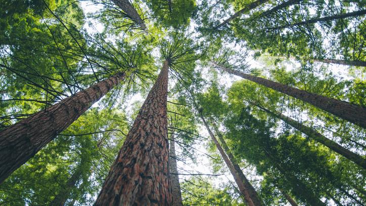 Nem az erdőtelepítés lesz a ludas: kiderült, miért sivatagosodik a Homokhátság