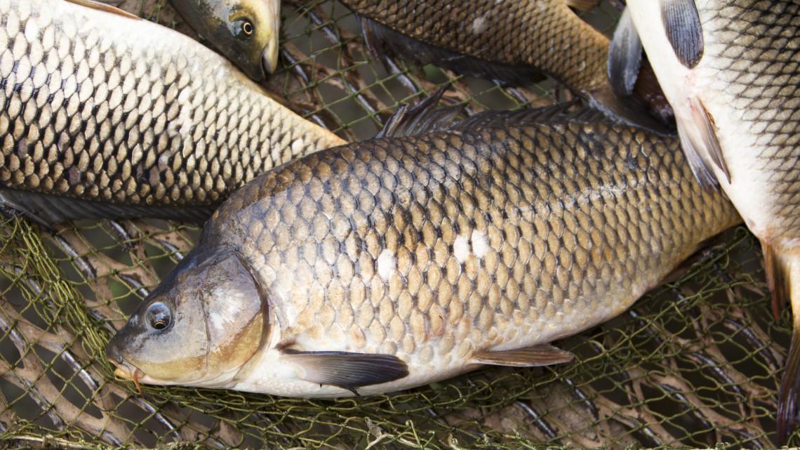 Orvhalászokra csapott le a rendőrség: tiltott módszerrel fogtak ki több kilogramm halat