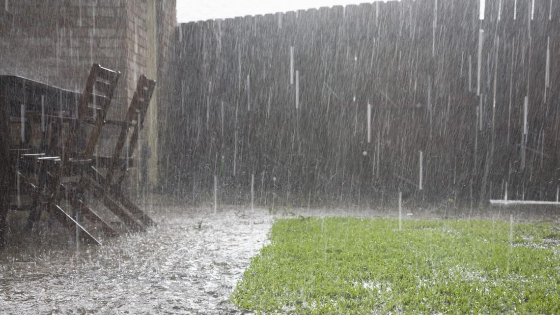 Egyre rosszabb a helyzet: az őszi kalászosok már szinte sírnak az eső után