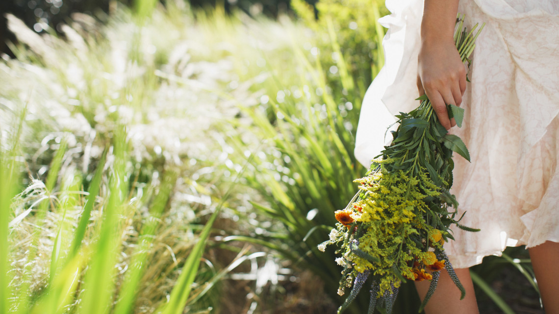 Most virágzik a különleges növény: brutális bírságot kaphat aki leszedi + FOTÓ