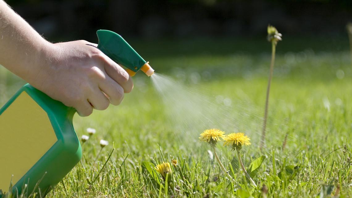 Ints búcsút a kerti gyomoknak: íme 5+1 házi módszer a kiirtásukra