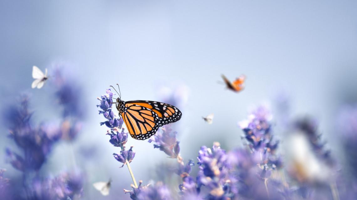 Eljött a rovar-apokalipszis: ha így megy tovább, folytatódik a brutális pusztulás