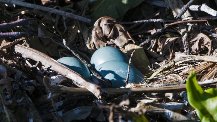 Csak óvatosan a kivágással és metszéssel: megkezdődött a madarak költési időszaka