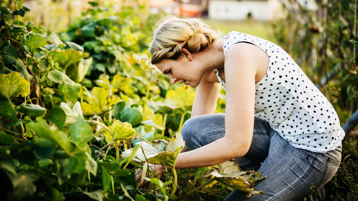 Ezek a legfontosabb kerti munkák májusban: itt a 7 pontos feladatlista