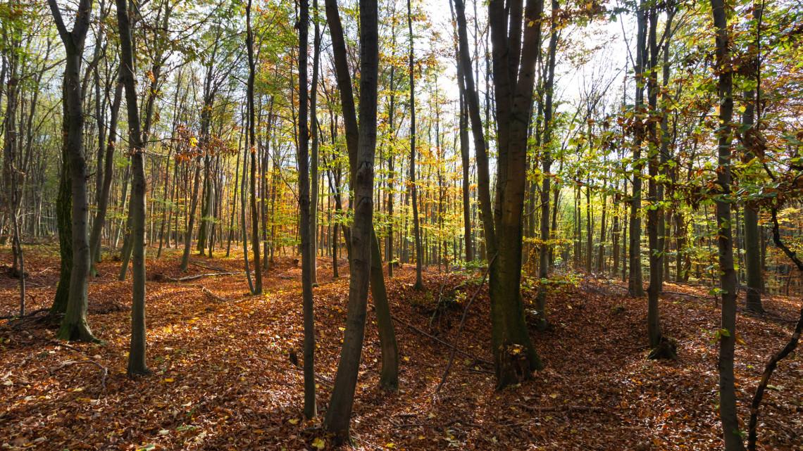 Tragédia a somogyi erdőben: eltűnt kislány maradványaira bukkant egy gombászó pár