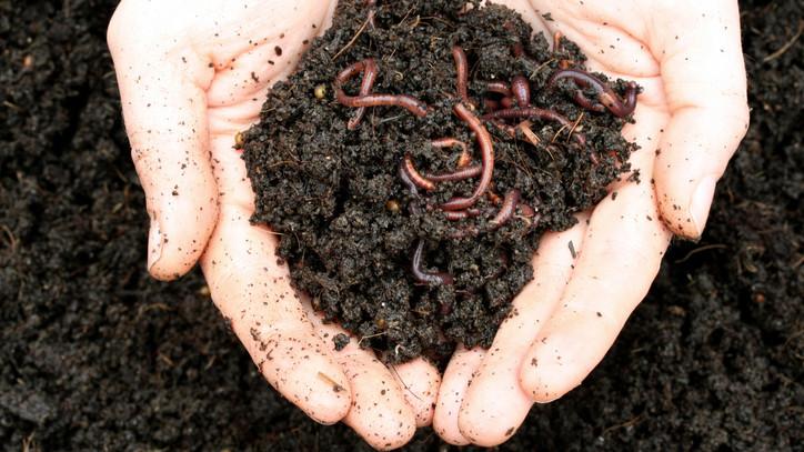 Itt a hobbikertészek legvadabb trükkje: így turbózzák fel egyre többen a talajt