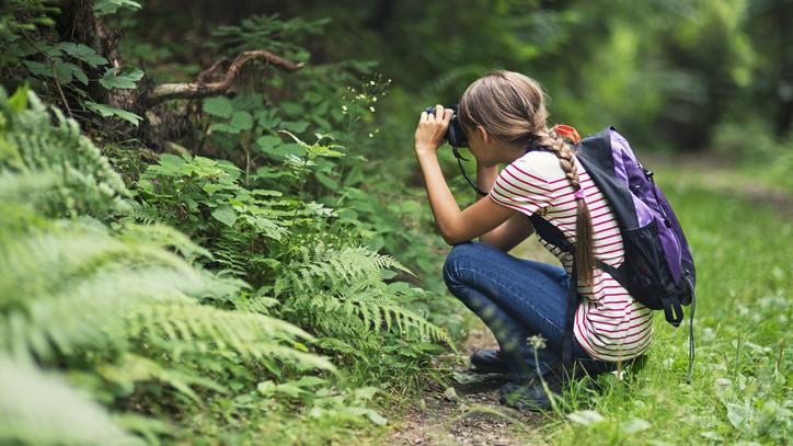 Karantén alatt is közel a természethez: online erdei iskola sorozat indul