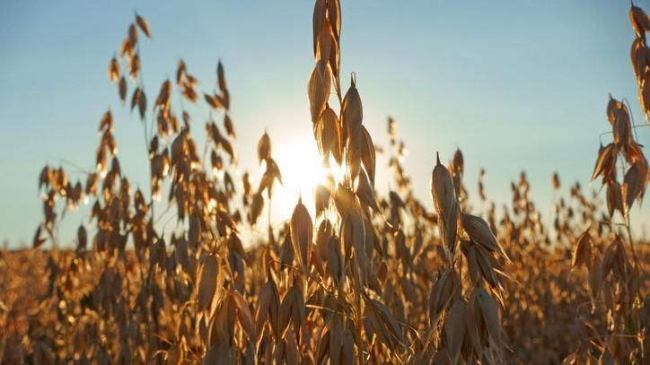 Jelentős károk a termésben: súlyos probléma fenyegeti a gazdákat