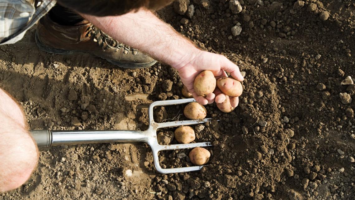 Hihetetlen: világháborús robbanótestek lapultak az import krumplik között
