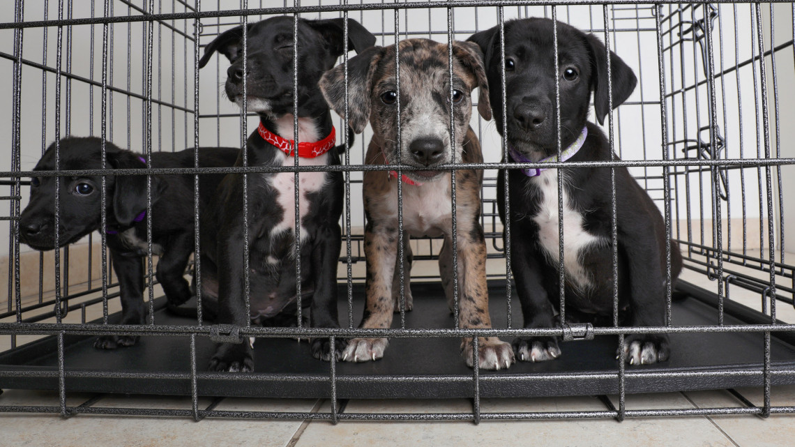 Az állatmenhely nem kölcsönző: sokan örökbefogadással játszanák ki a kormányrendeletet