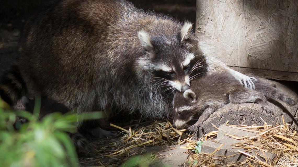 Ötös ikrek születtek: ismét gyarapodott a Debreceni Állatkert