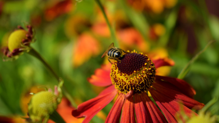 Veszélyes növények a kertben: csak óvatosan, ezek mind súlyos bőrirritációt okozhatnak