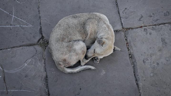 Fontos kérdésekre válaszolt az állatmentő: ezért van egyre több a kidobott, beteg állat az utcákon