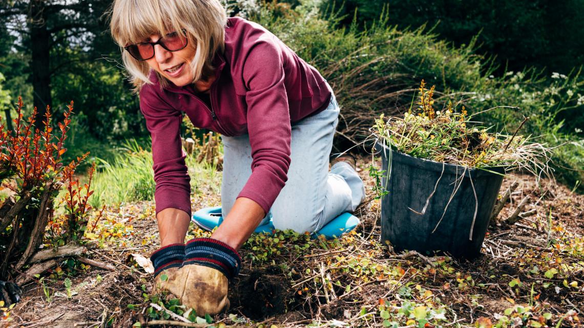 Ezektől a növényektől jobb, ha megszabadulsz: súlyos bírság járhat a figyelmetlen kerttulajdonosoknak