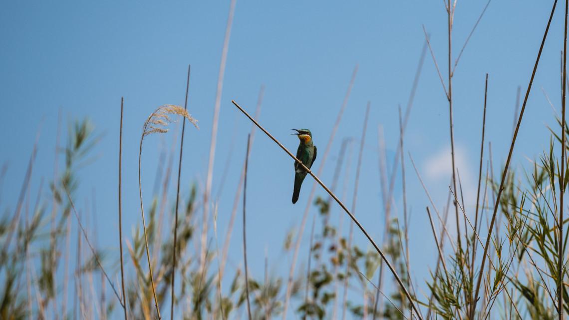 Fantasztikus madarat figyeltek meg vidéken: most először láttak ilyet Magyarországon