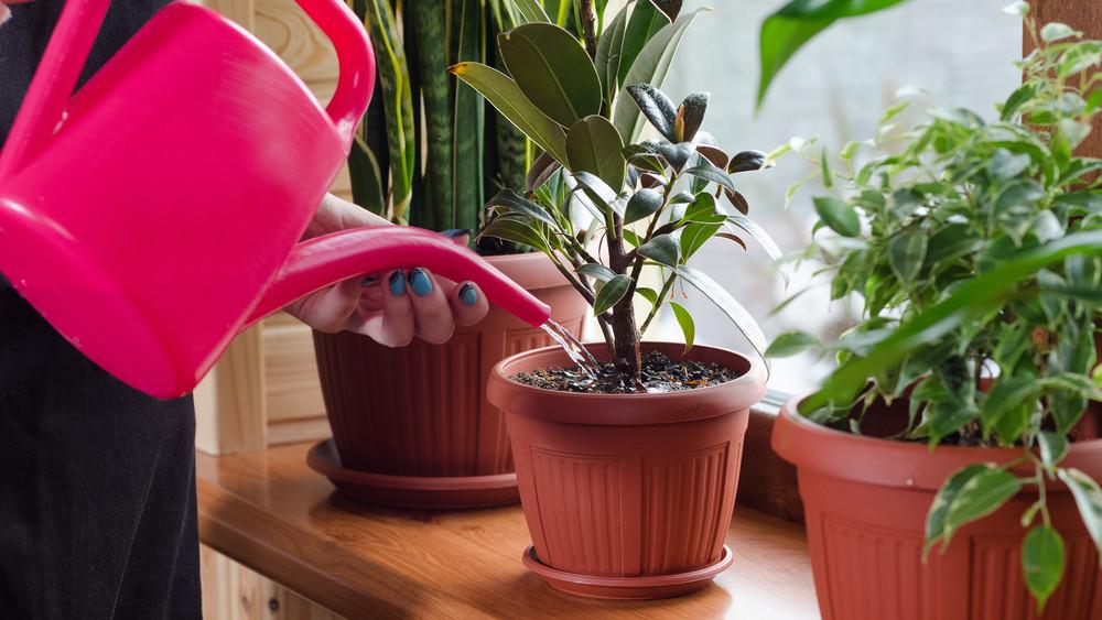 Nagyon nem elég csak locsolni a növényeket: 5 dolog, amiről mindenki megfeledkezik