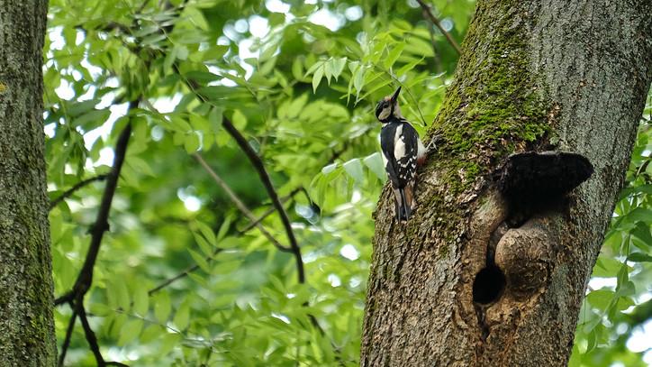 Aggasztó a magyar madarak sorsa: ezért csökken drasztikusan a fészkelőállomány