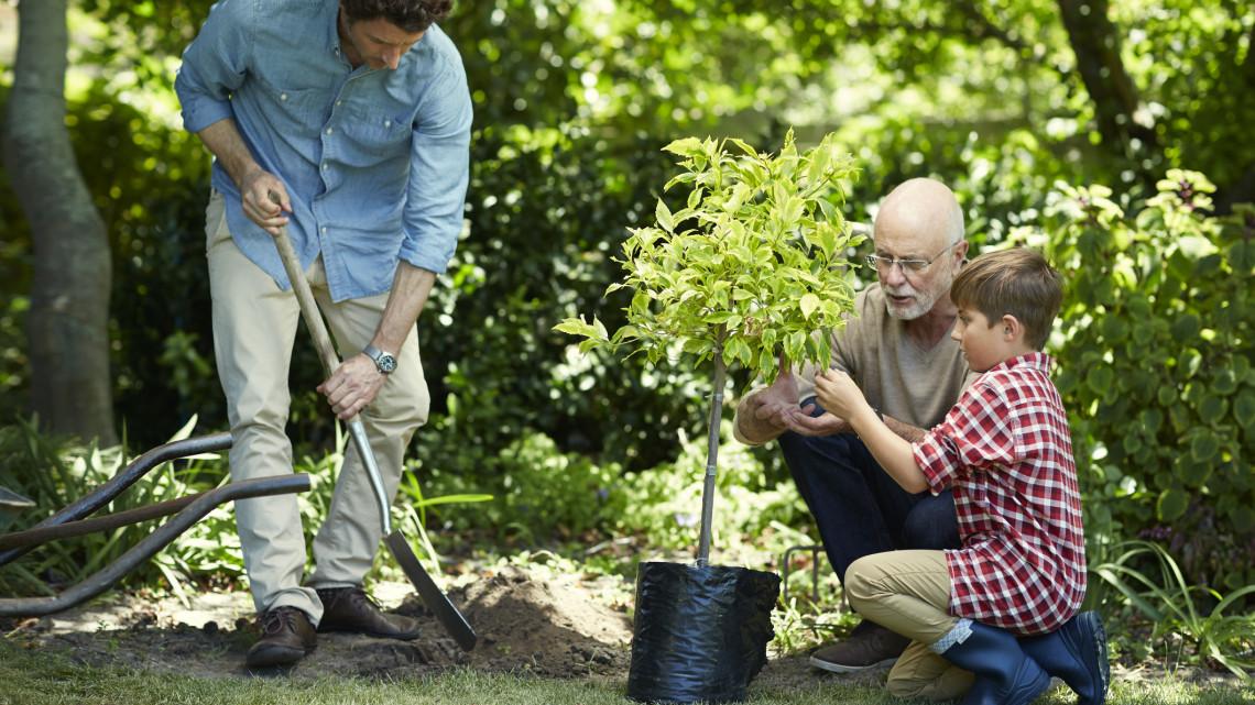 Több száz millióból ültetnek fákat: így lehet jelentkezni a programra