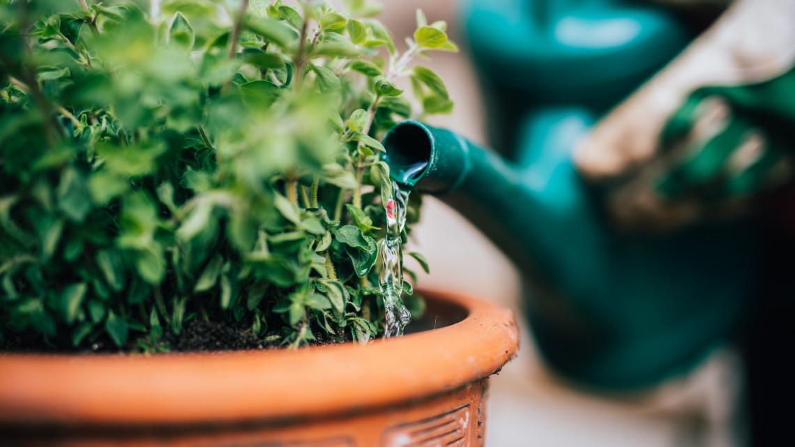 Ezek a legfontosabb kerti munkák júniusban: íme a 7 pontos feladatlista