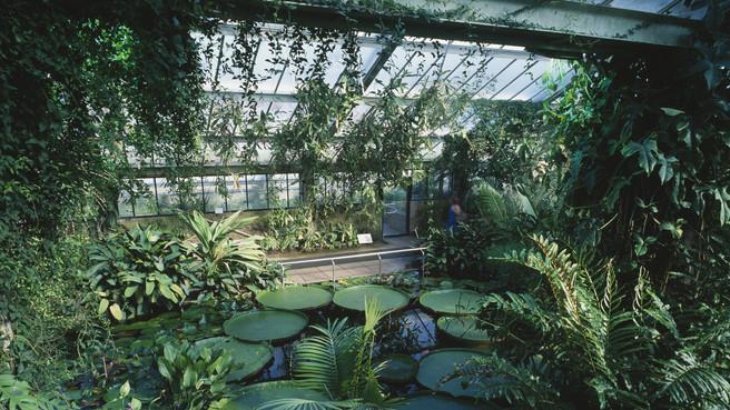 Trópusi kalandozás: rendkívül ritka lények láthatók a szegedi egyetemi füvészkertben