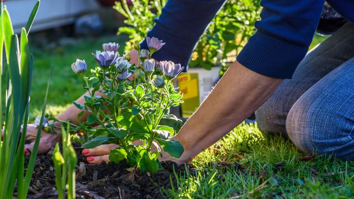 Turbózd fel a termést egy egyszerű praktikával: így válaszd ki a tökéletes talajtakarót