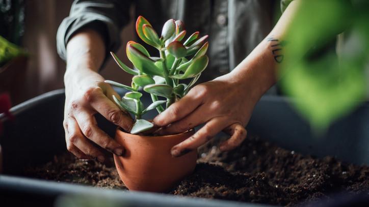 Pozsgásokat nevelnél? Íme 4 kertészbaki, ami akár a növény életébe is kerülhet