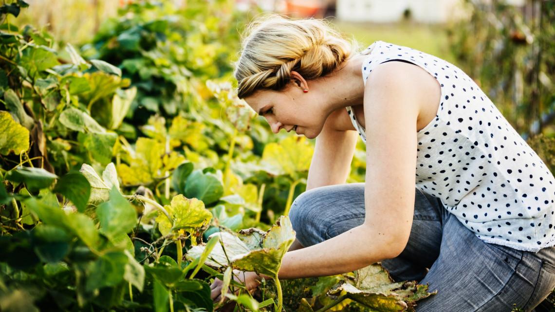 Megdöbbentő, de működik: 8 növénypáros, amit mindenképp egymás mellé ültess a kertedben