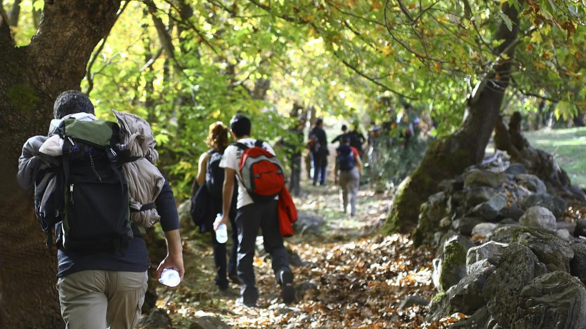 Ezt sokan nem tudták a népszerű helyről: itt találod a magyar őserdőt