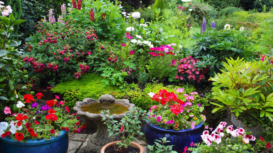 Brutális forróság pusztítja a hazai kerteket: 4+1 virág, ami hőségben is tündököl
