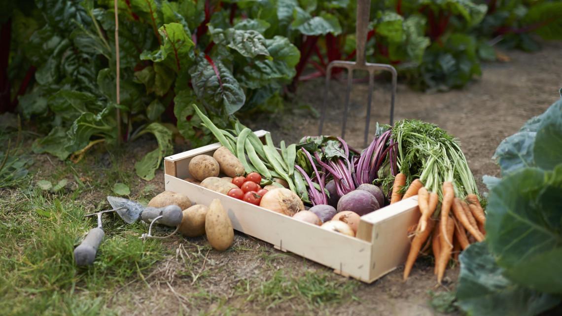 Csak jól járhatsz velük: ez a 10 zöldség a legamatőrebb kertésznél is vígan megterem