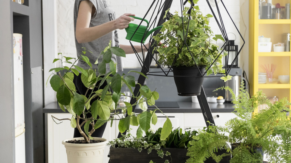 Hobbikertészek őrült trükkjei: elképesztő helyen nevelhetsz virágot a lakásban