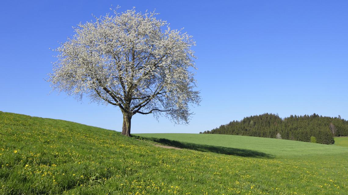 Durván drágul a népszerű gyümölcs: gyenge termésre számítanak a gazdák