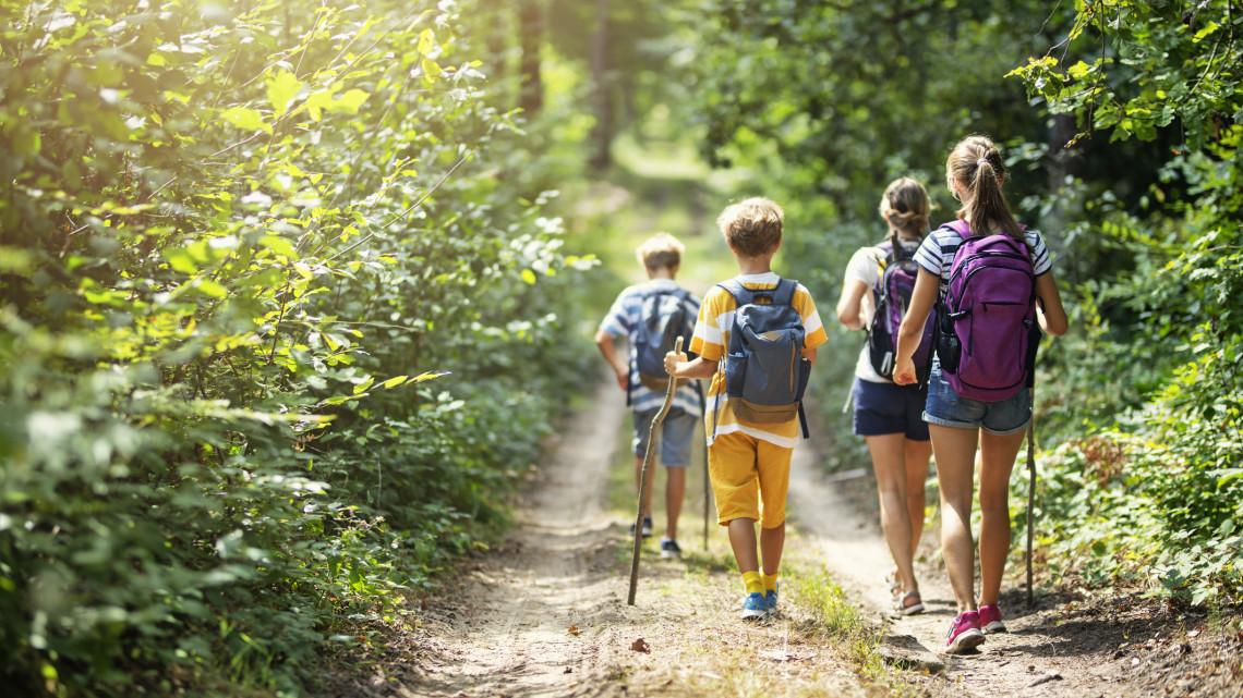 Súlyos bírságot kaphatsz ezért a magyar erdőkben: sok túrázó fizethet