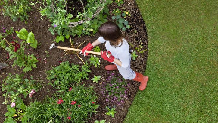 Profi kertészek hozamnövelő trükkje: így duplázd meg olcsón a terményedet