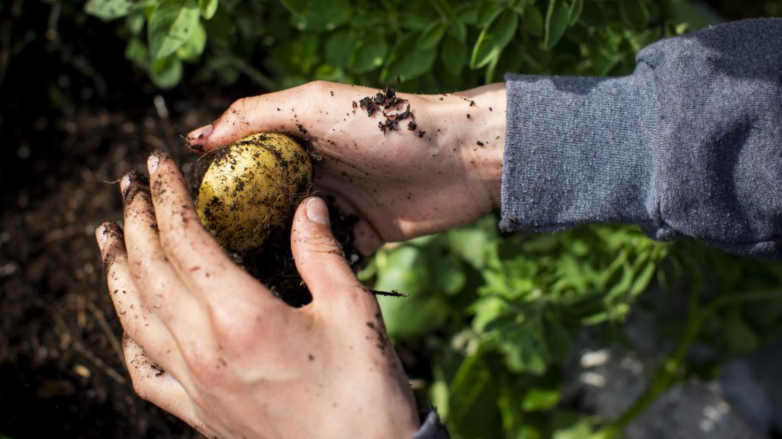 Profi kertészek filléres trükkje: 5 zöldség, amit egy pohár vízben is termeszthetünk