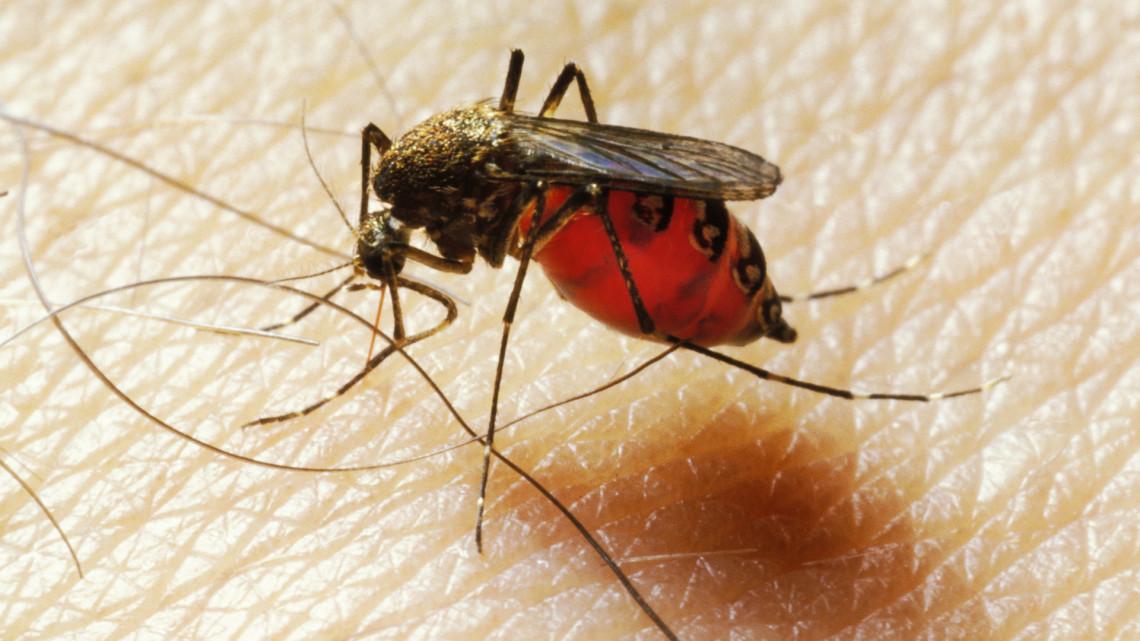 Egyre nehezebb feladat a szúnyogok irtása: ezeken a területeken folytatódik a munka