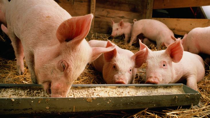 Brutális csapást mért a járvány az agráriumra: hogyan állnak fel ebből a gazdák?