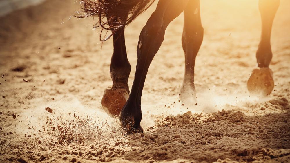 Szereted a lovakat? Íme 8 program a nyárra, amit nem érdemes kihagyni!