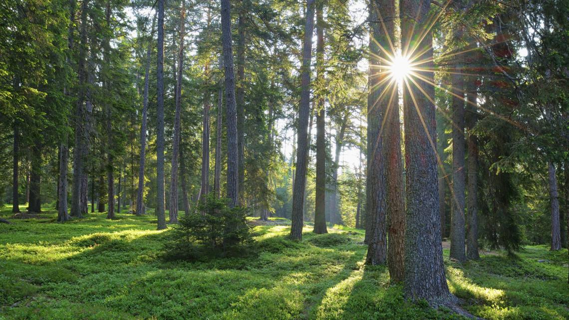 Ismét gyarapodnak az erdők: egy hektár új erdőt létesítenek a területen