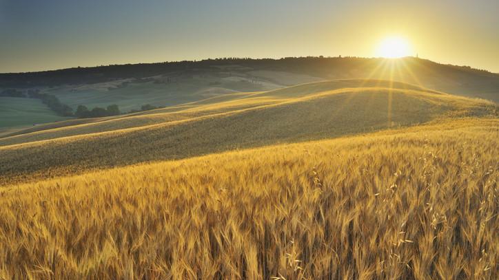 Fontos határidő közeledik: kezdődik az egyéni gazdaságok összeírása